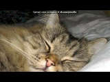«my cat» под музыку Nek - Se Una Regola Ce. Picrolla